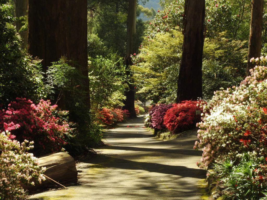 Свойства древесины ясеня и ее использование