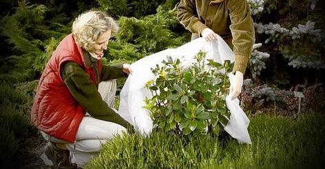 Когда и как правильно укрывать растения на зиму? фото — ботаничка.ru