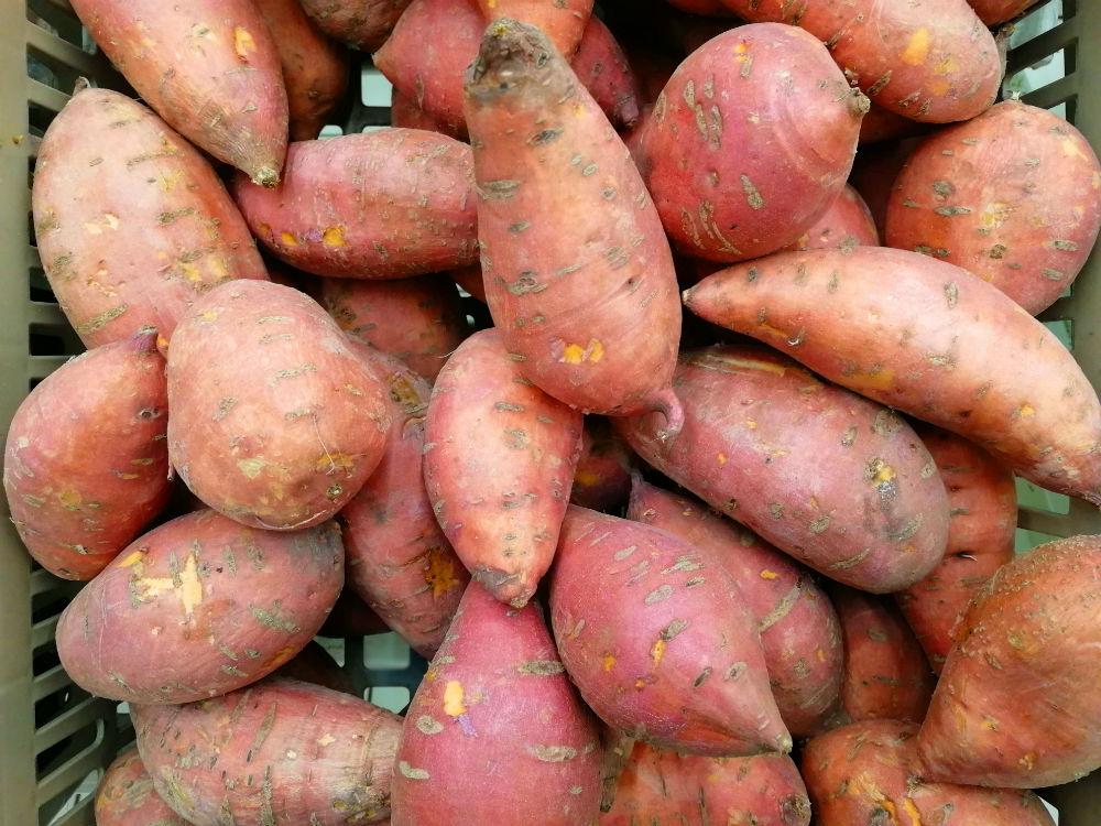 Отличия батата от картофеля: сравнение по калорийности, вкусу и другим параметрам, что полезнее и когда применяется? русский фермер