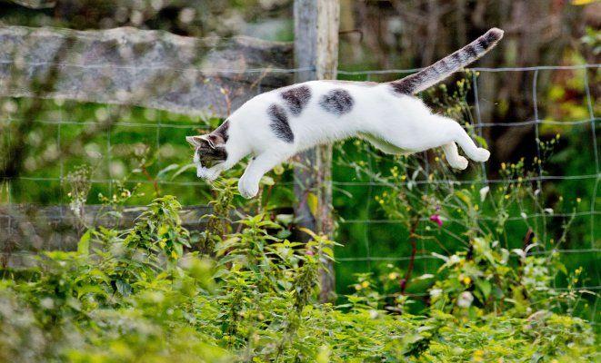 как избавиться от кошки