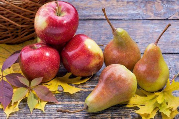 Подкормка яблони: что, когда и как вносить, обзор удобрений и сроки