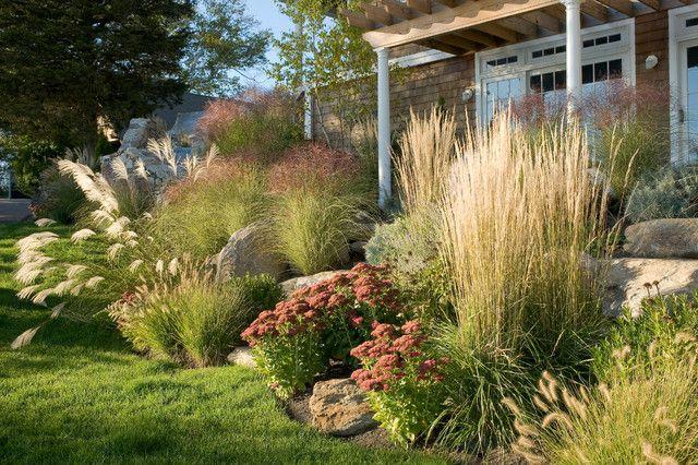 Декоративные злаки и травы для сада в ландшафтном дизайне