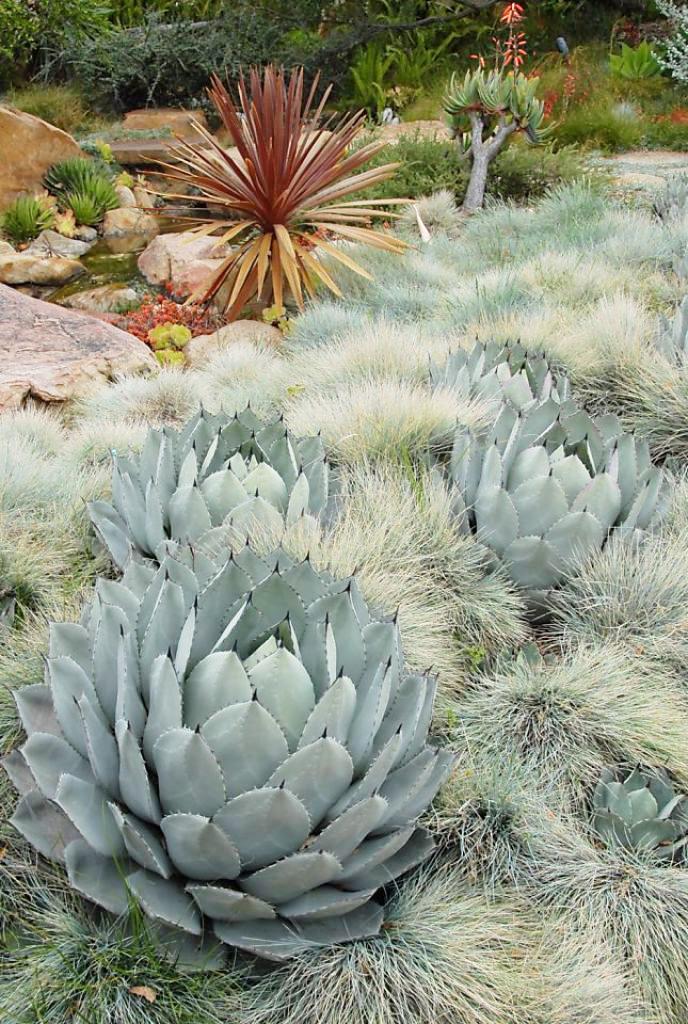 11 красивых и неприхотливых декоративных злаков для сада