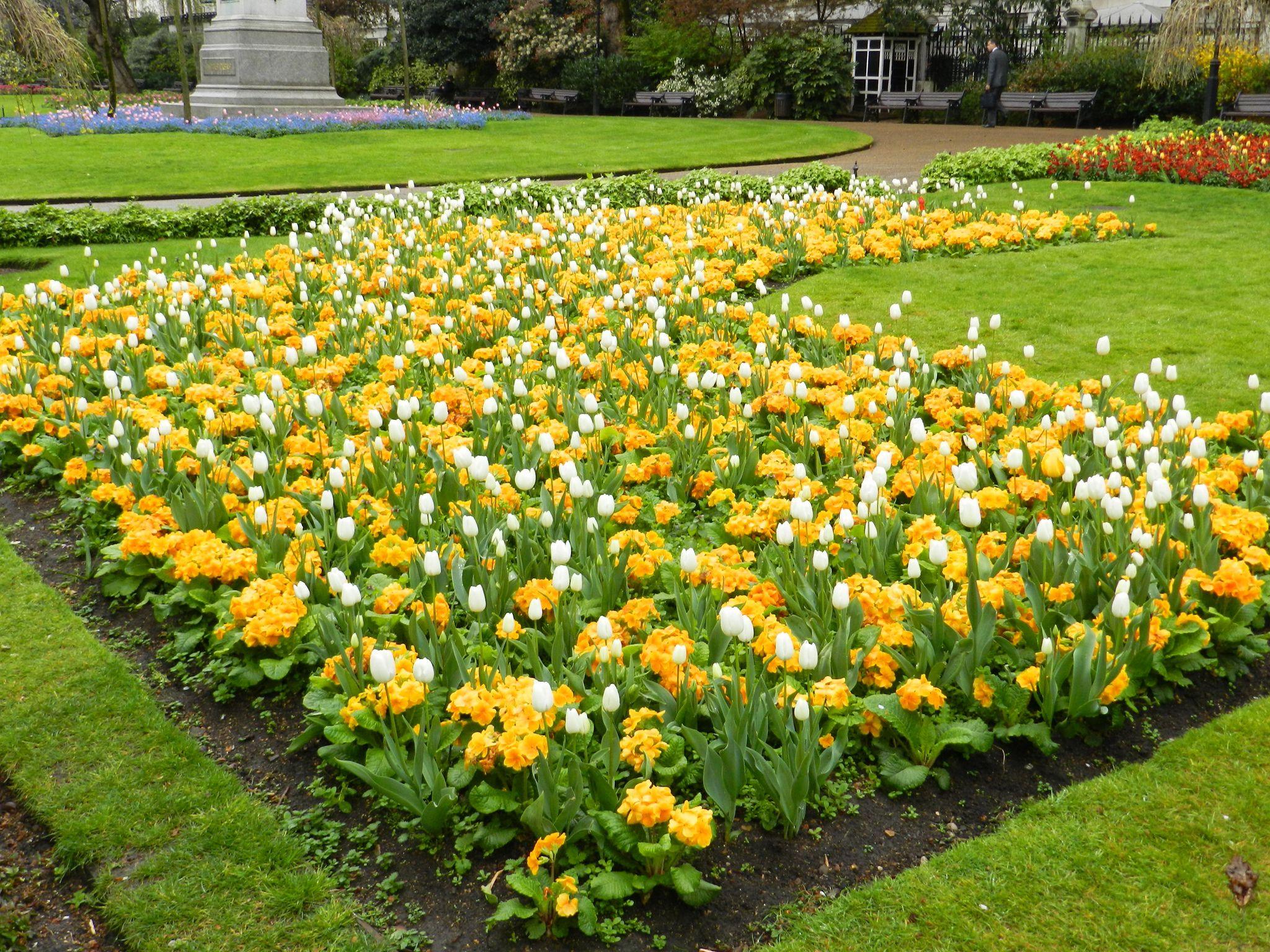 Натурализация примул в саду. личный опыт