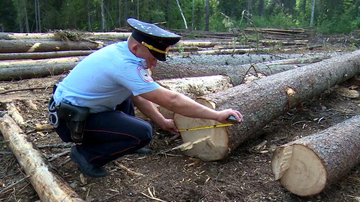 штраф за спил дерева
