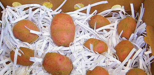 Секреты хранения картофеля зимой в погребе: какой должна быть температура, как оборудовать помещение?