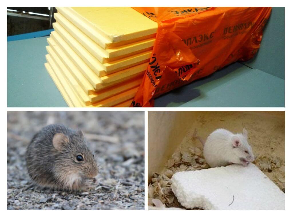 Выбор утеплителя, который не грызут мыши и крысы
