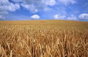 для ведения крестьянского фермерского хозяйства