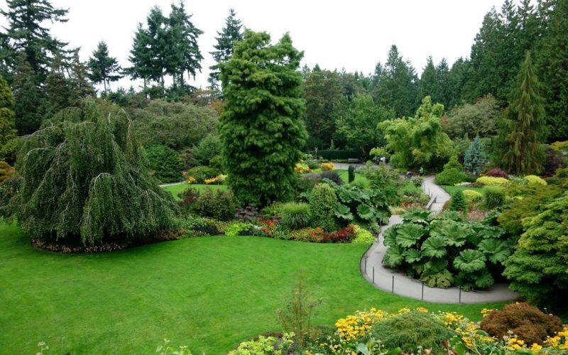 Живая изгородь в подмосковье, из чего ее лучше сделать: лучшие быстрорастущие растения и кустарники