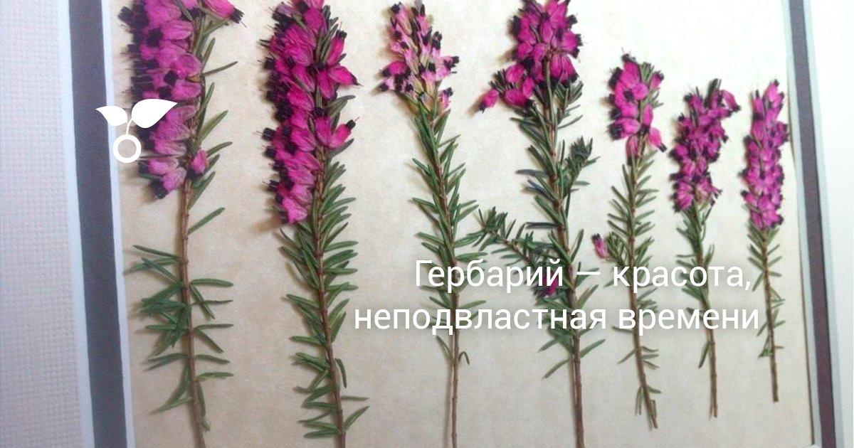 как выглядит гербарий