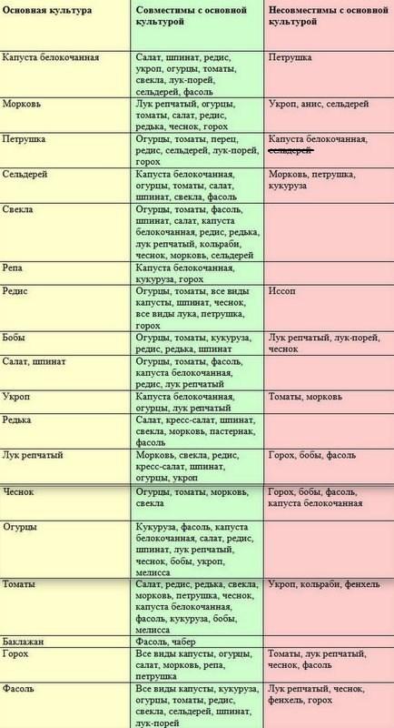 Совместимость растений при посадке: таблица, советы, схемы