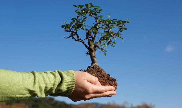 Пересадка плодовых деревьев осенью. плюсы и минусы осенней посадки. советы от бывалых агрономов