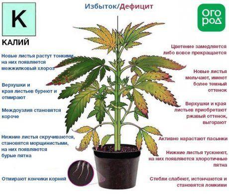 Удобрение хлористый калий: инструкция по применению на огороде. формула и состав хлористого калийного минерального удобрения для растений