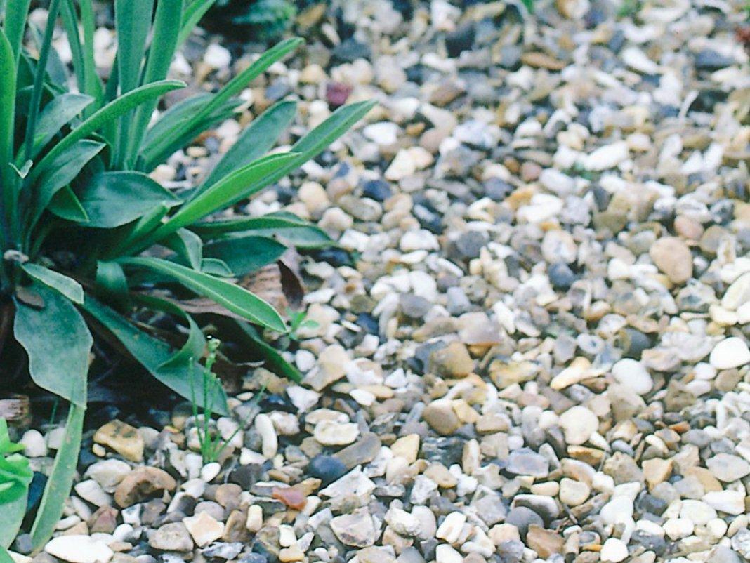 Что такое мульчирование почвы и зачем оно нужно?