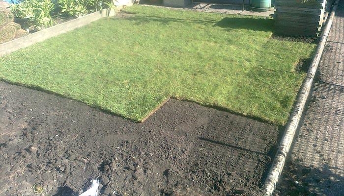 Газон на даче: примеры травяного покрытия с фото