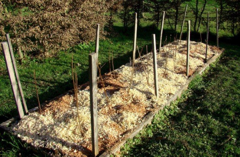 Как подготовить малину к зиме, чтобы получить большой урожай – советы опытных садоводов