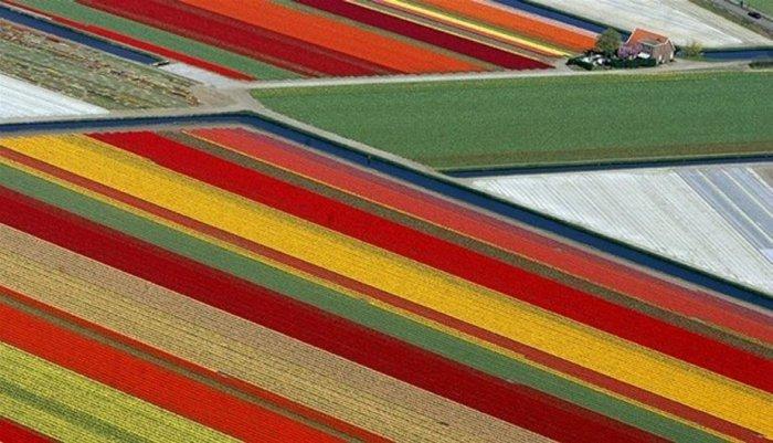 Спутники для тюльпана
