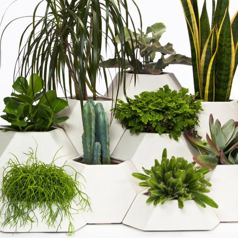 какие комнатные растения есть
