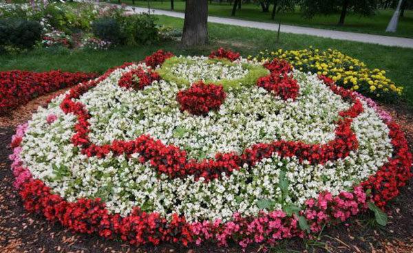 клумбовые цветы названия и фото