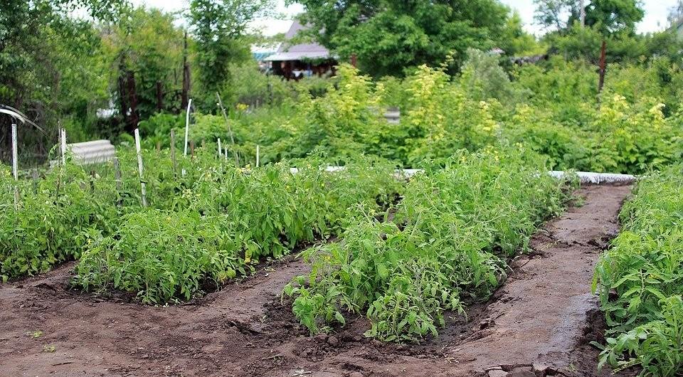 Как избавиться от слизней в огороде: народные средства