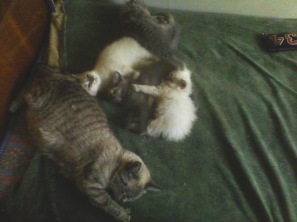 Как избавится от кошки гуманным способом   catstreet.ru