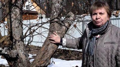 Мох на деревьях — польза, вред, методы профилактики и борьбы. фото — ботаничка.ru