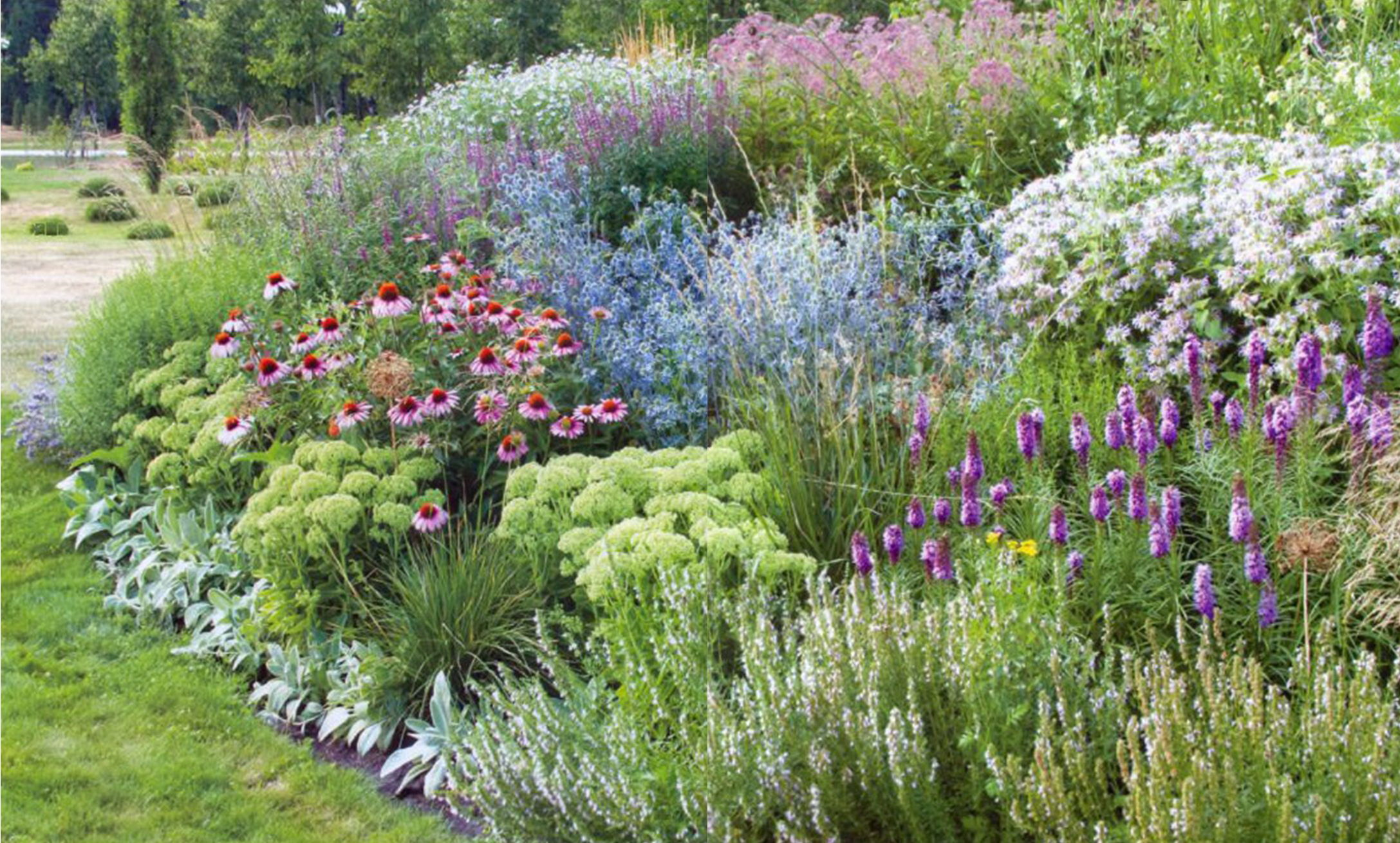 Почвопокровные многолетники цветущие все лето: фото и названия