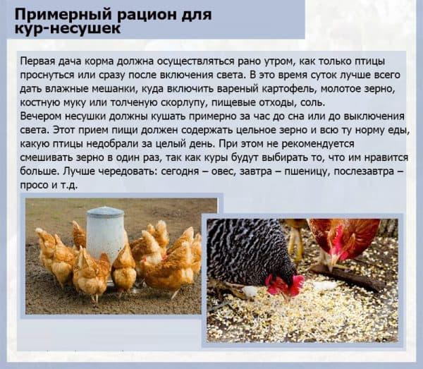 корм для куриц