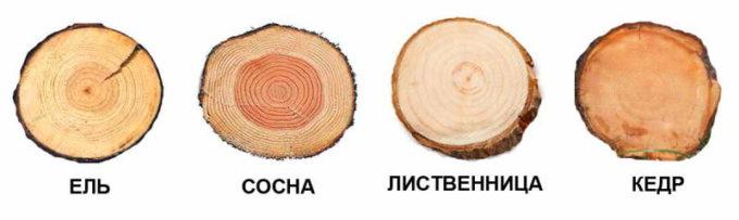 характеристика дерева