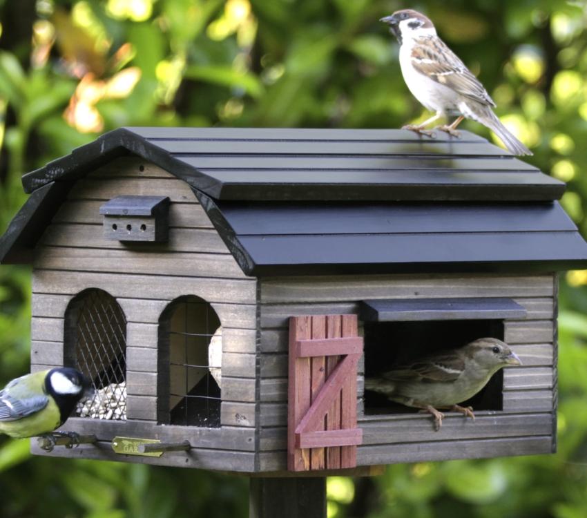 Кормушка для птиц своими руками: 12 оригинальных идей