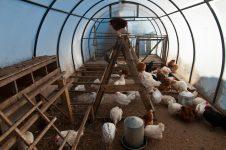Какую температуру выдерживают куры зимой: какой должна быть в курятнике?