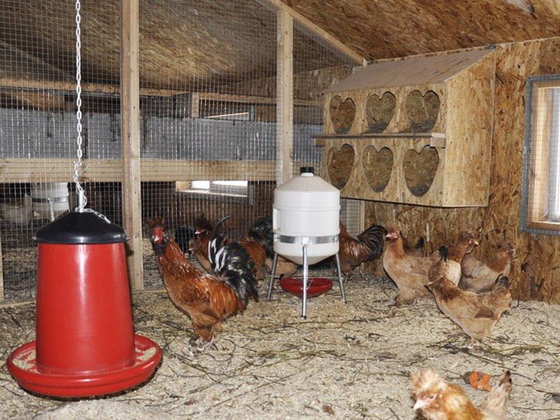 Клетки для кур-несушек в домашних условиях: как наладить кормление и освещение при клеточном содержании, фото selo.guru — интернет портал о сельском хозяйстве