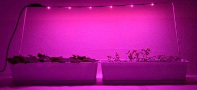 Люминесцентные лампы для растений: характеристика, выбор, рекомендации