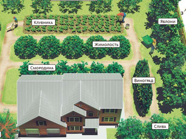 Как правильно расположить теплицу, деревья и кусты на садовом участке. планировка участка
