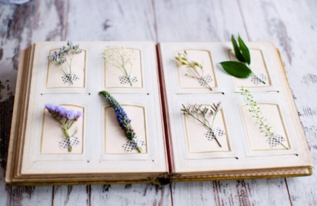 Как сделать гербарий с названиями растений из листьев деревьев и цветов (+быстрые способы высушить)