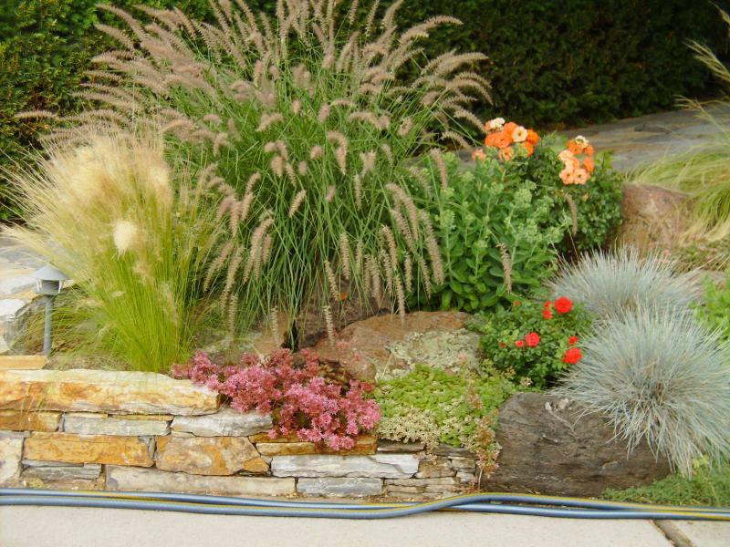 Декоративные травы, злаки и осоки в дизайне сада