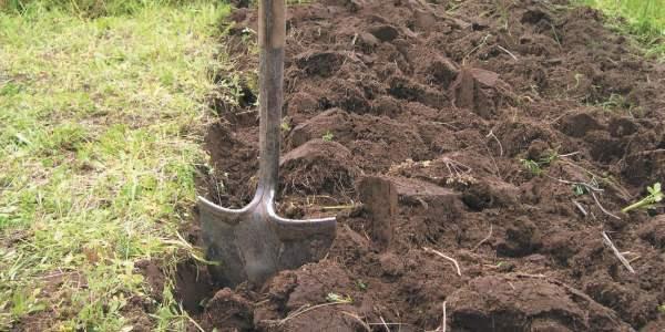 Природное земледелие с чего начать - огород природное земледелие