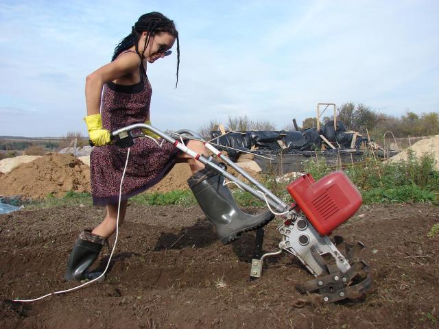 Посев сидератов осенью: как, когда и что сажать под зиму (после картофеля и других культур)