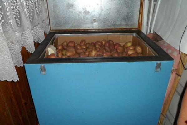 Как хранить картошку в квартире: где и в чем держать овощ зимой в домашних условиях, в том числе как правильно складировать его на кухне и в других помещениях? русский фермер