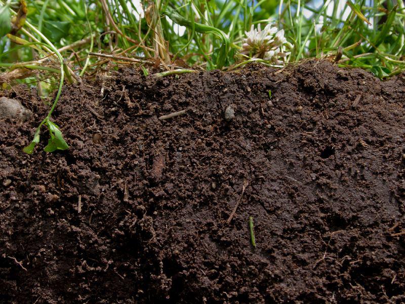 Виды почв, их особенности и способы улучшения