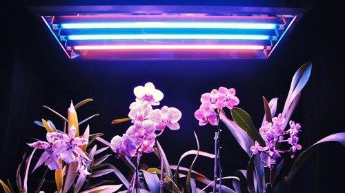 Светодиодная лента для растений: особенности, виды, как выбрать фито светодиоды