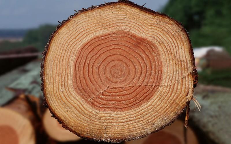 для чего нужна древесина