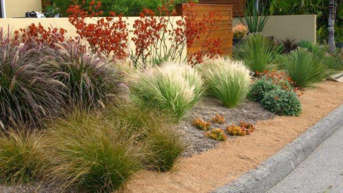 Декоративные травы для сада: названия и фото популярных растений, комбинированная посадка