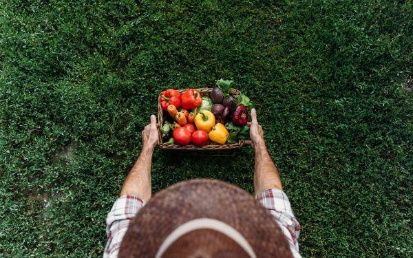 органическое земледелие с чего начать