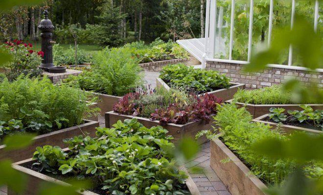 Огород на дачном участке: планировка и красивый огород своими руками (видео + 130 фото)