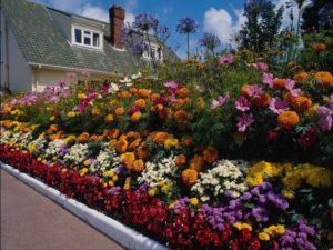 Клумбовые цветы и растения: названия однолетних и многолетних, светолюбивых