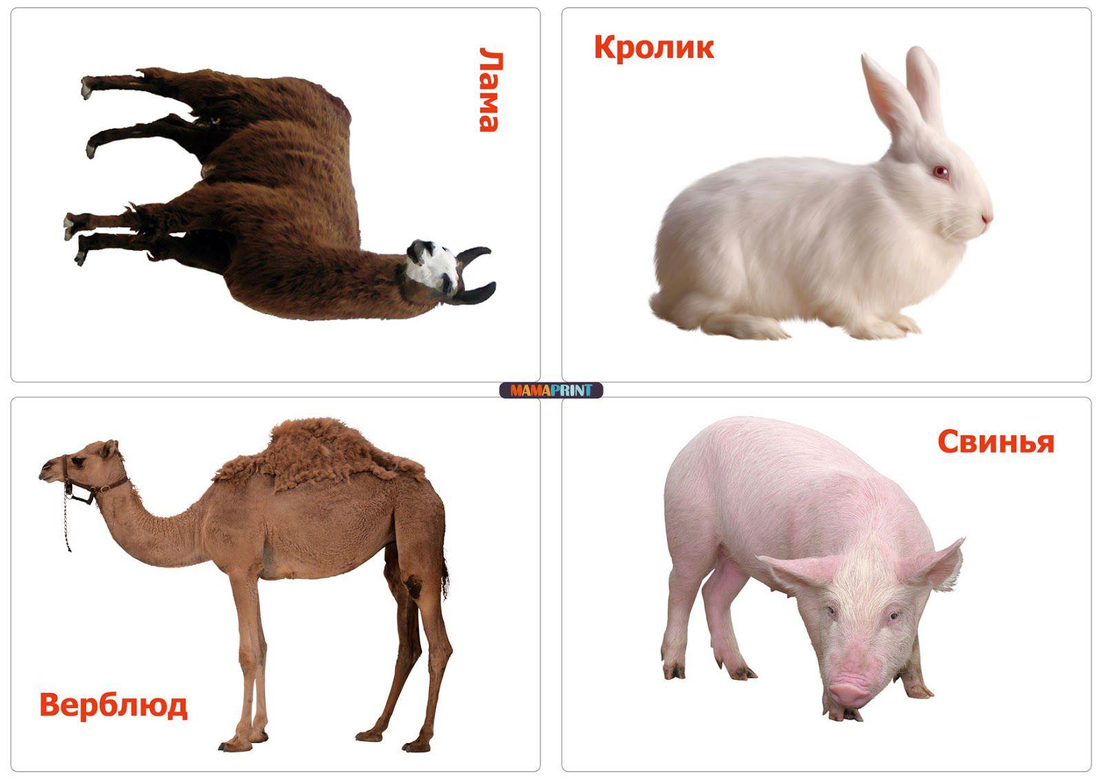 самые неприхотливые домашние животные