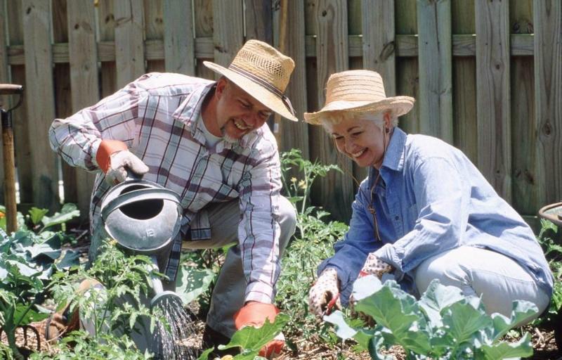 Дачные хитрости: полезные советы для сада и огорода