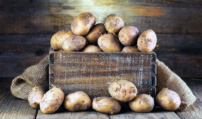Как правильно хранить картофель зимой в подвале и в квартире