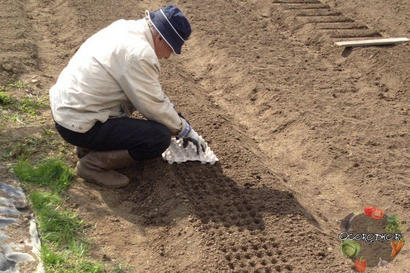 как сажать чеснок осенью пошаговая инструкция